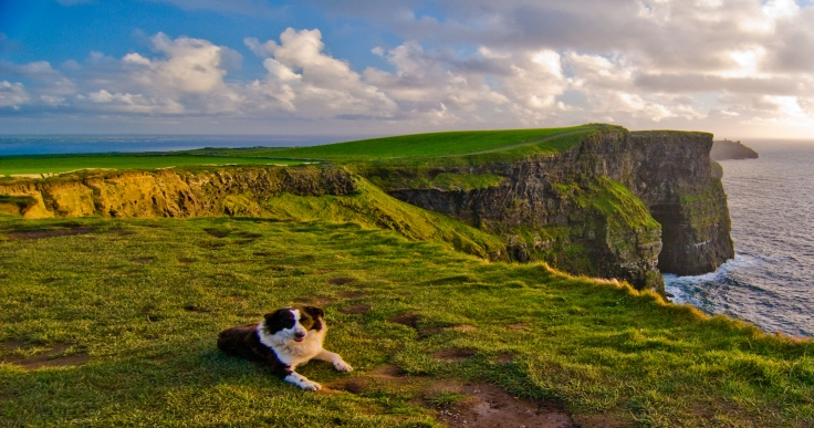 Cliffs-of-Moher-collie.jpg